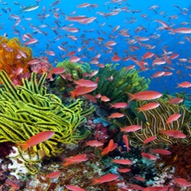 See the Great Barrier Reef - Bucket List Ideas