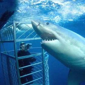 Shark cage diving - Bucket List Ideas