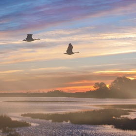 Visit Chincoteague National Wildlife Refuge, Virginia - Bucket List Ideas