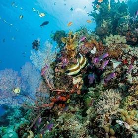 Scuba dive/Snorkel the Great Barrier Reef - Bucket List Ideas