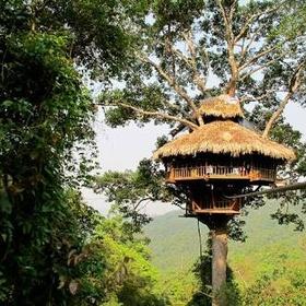 Do the Gibbon experience in Laos - Bucket List Ideas