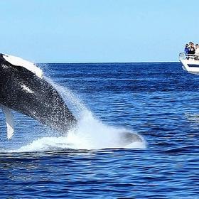 Whale watching - Bucket List Ideas