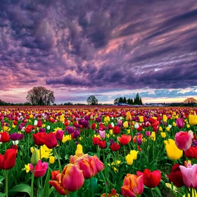 Bike in the tulip fields in netherlands - Bucket List Ideas