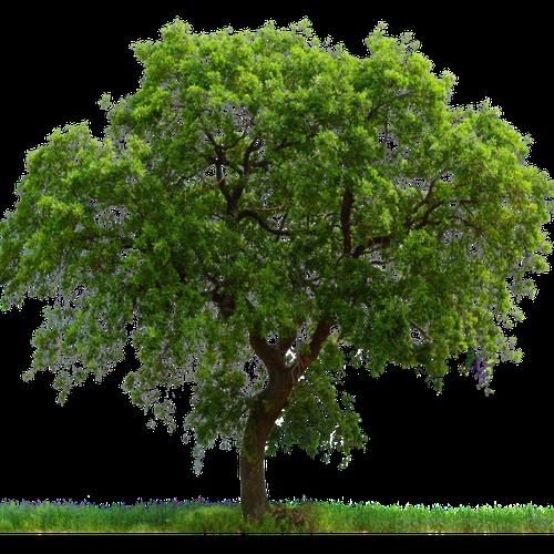 Plant a tree - Bucket List Ideas