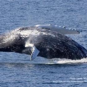 Spot whales in the wild - Bucket List Ideas