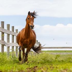 Buy a Horse - Bucket List Ideas