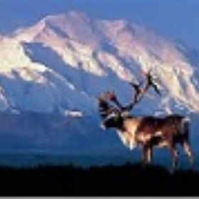 Visit Denali National Park in Alaska - Bucket List Ideas