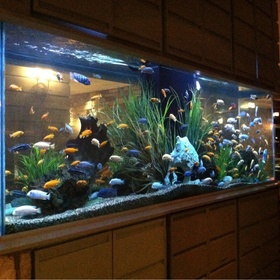 Having a beautiful aquarium full of fish - Bucket List Ideas