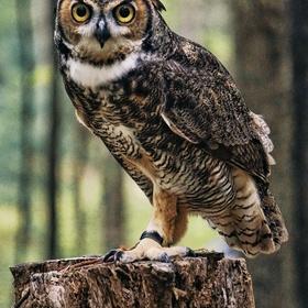 Hold a owl - Bucket List Ideas