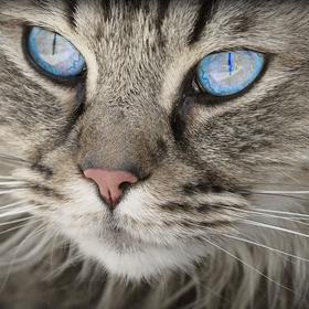Take a Cat Yoga class - Bucket List Ideas