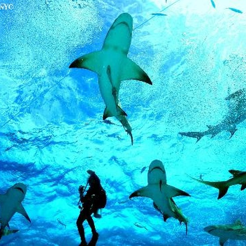 Shark dive in the bahamas - Bucket List Ideas