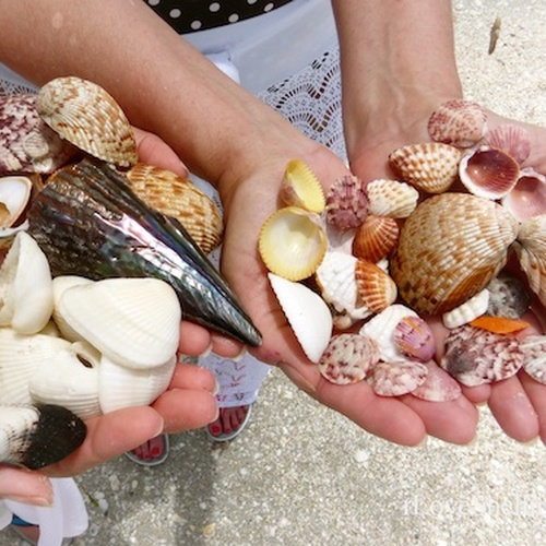 Collecting shells from the beach - Bucket List Ideas