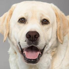 Adopt a Dog (Labrador/Husky/Corgi) - Bucket List Ideas