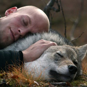 Cuddle with wolves in WolfLodge - POLAR PARK Arctic Wildlife Centre, Norway - Bucket List Ideas