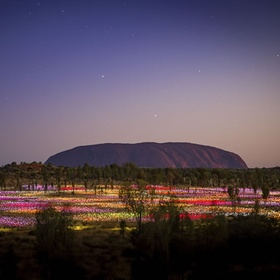 See field of light Uluru | Northern Territory | Australia - Bucket List Ideas