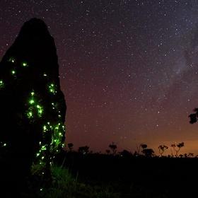 See the termite lighthouses - Bucket List Ideas