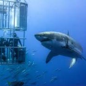 Go in a Shark Cage - Bucket List Ideas