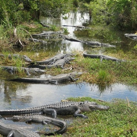 Visit the Everglades - Bucket List Ideas