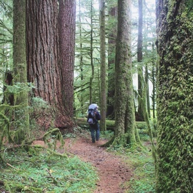 Walk through the Valley of the Giants in Oregon - Bucket List Ideas