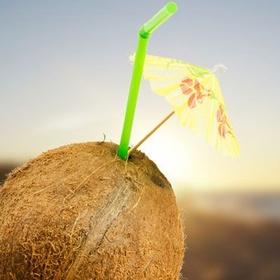 Draw Milk From A Coconut With A Straw - Bucket List Ideas
