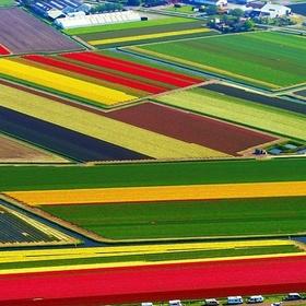 Netherlands - Visit the Tulip Fields - Keukenhof - Bucket List Ideas