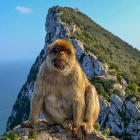 Take a photo with a Monkey at the Rock of Gibraltar ~Spain - Bucket List Ideas