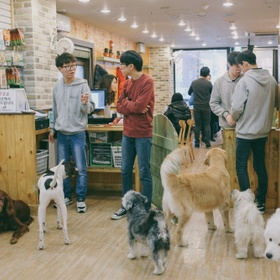 Visit a Dog Cafe - Bucket List Ideas