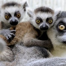 Go to madagascar and sing, i like to move it !! - Bucket List Ideas