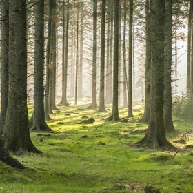 Explore a Real Forest - Bucket List Ideas