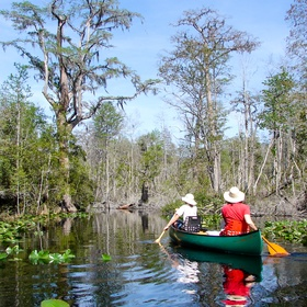 Canoe down the water trails of Georgia's Okefenokee Wilderness - Bucket List Ideas