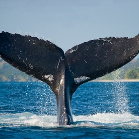 See a Whale in nature - Bucket List Ideas