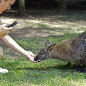 Hang out with wallabies - Bucket List Ideas
