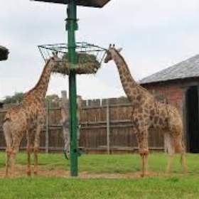 Become a zoo keeper for the day - Bucket List Ideas