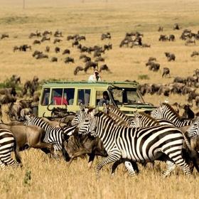 Holiday - Go on an African safari - Bucket List Ideas