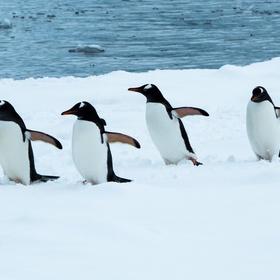 Touch a penguin - Bucket List Ideas