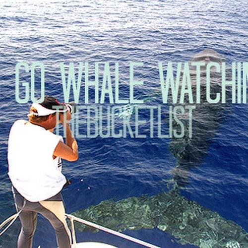 Go whale-watching - Bucket List Ideas