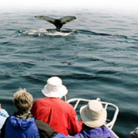 Whale watching - Bucket List Ideas
