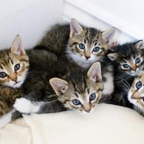 Become a hobby cat breeder - Bucket List Ideas