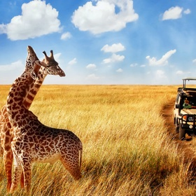 Go to the Safari - Bucket List Ideas