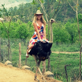 Ride an Ostrich - Bucket List Ideas