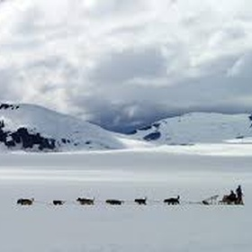 Go on a dog sledding expedition in Alaska - Bucket List Ideas