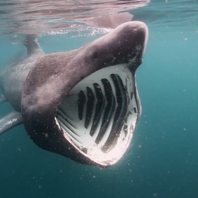 Get up close and personal with Basking Sharks in the Hebrides - Bucket List Ideas