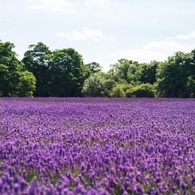 Go to a field of flowers - Bucket List Ideas