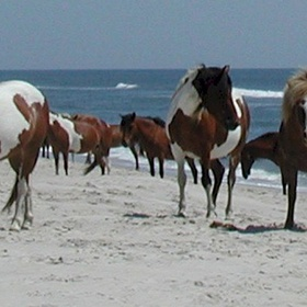 Go to Assateague Island in Maryland - Bucket List Ideas