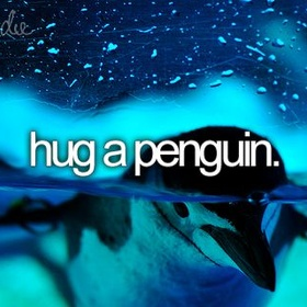 Hold a Penguin - Bucket List Ideas