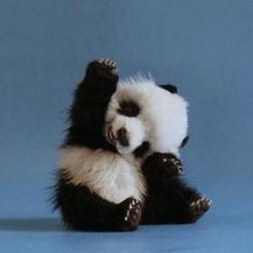 Pet a baby giant panda - Bucket List Ideas