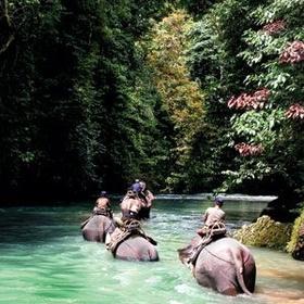 Ride an Elephant in Chiang Mai - Bucket List Ideas