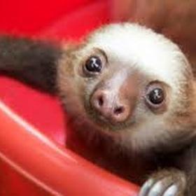 Pet a sloth - Bucket List Ideas