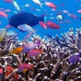 Dive at Raja Ampat - Bucket List Ideas