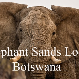 Stay at Elephants Sands | Botswana - Bucket List Ideas